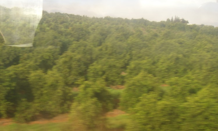 orange trees zoom by on train to Portimao