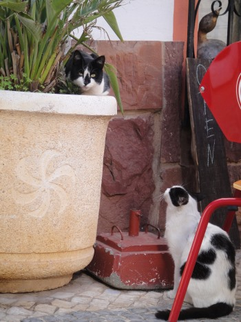two cats in Silves