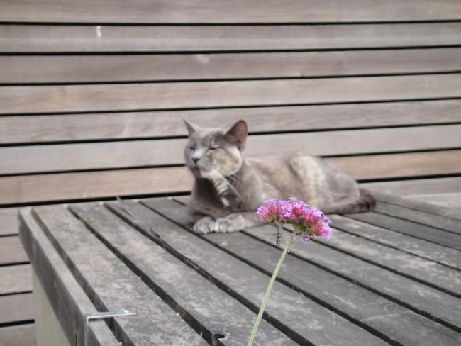 Mavis sniffing flowers