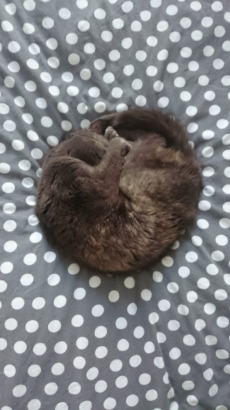 curled in a ball